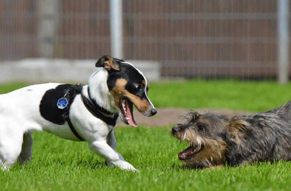 Keep Dogs Safe in the Yard with Pet Artificial Grass in Vacaville