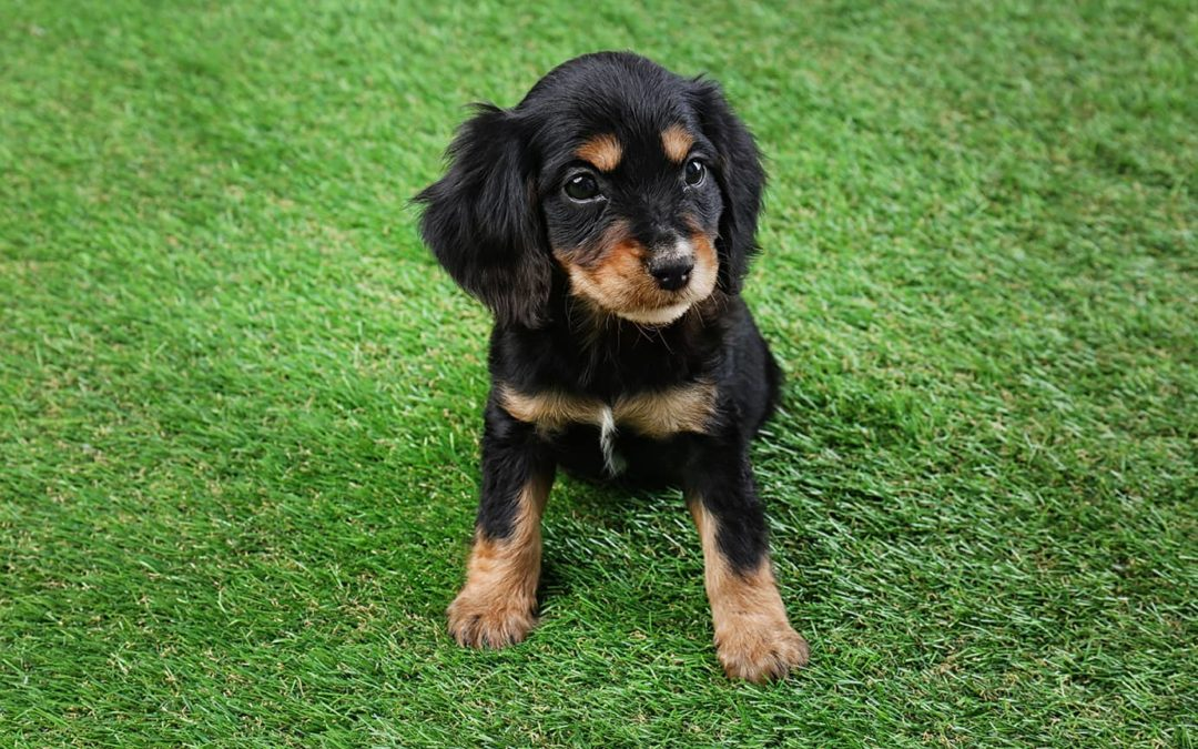 Use Pet Artificial Grass for Your Vacaville Home